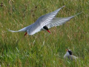 Fuglar á Íslandi
