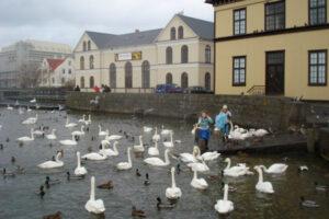 Tjörnin í Reykjavík
