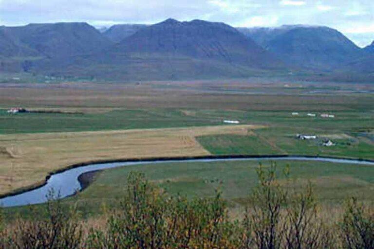 Víðigerði